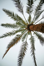 The Blue shinning Sky through Date-Palm leaves