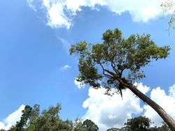 the blue sky reconciles a downhearted heart