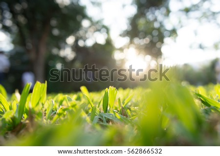 The blur of grass in garden, bokeh background