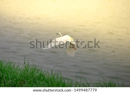 The blurred background of birds, who are walking foraging near the river, catching fish in their livelihoods, are moving by flying fast as animal instincts.