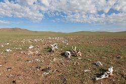 The bones of dead animals in the desert