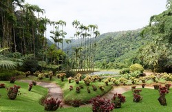 The botanical garden located near Fort-de-France, Martinique, French West Indies.