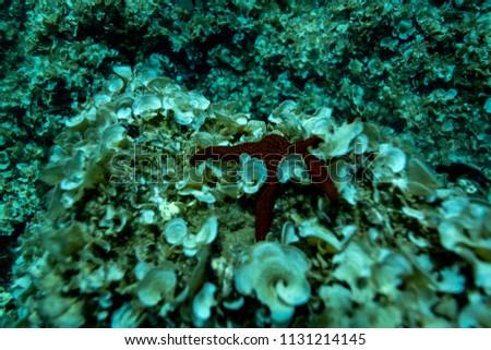 The bottom of the Aegean Sea off the coast of Greece.