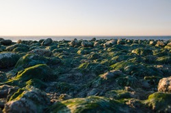 the bottom of the sea of Azov without water. a strong tide. rocks covered with seaweed and sand.