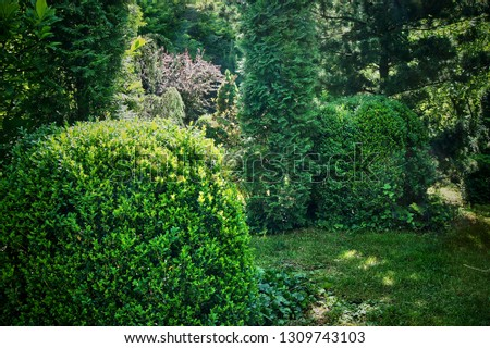 The box is ordinary, European box or box, a kind of evergreen shrub among the evergreens of a beautiful garden. Hedging, landscape design background. Green branches of boxwood. Selective focus #1309743103