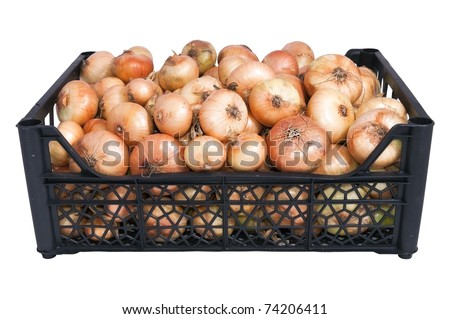 the box or tray of  bright fresh yellow onions isolated over white