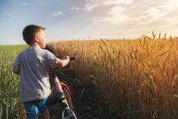 The boy is riding a bicycle across the field with wheat yellow and green. Sunny weather in a solitary place.
