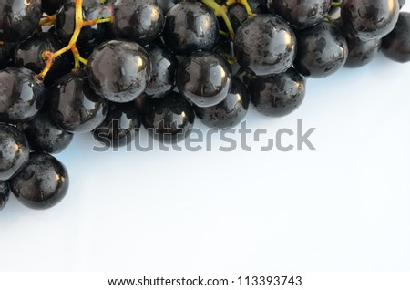 The branch of grapes with space for text, isolated