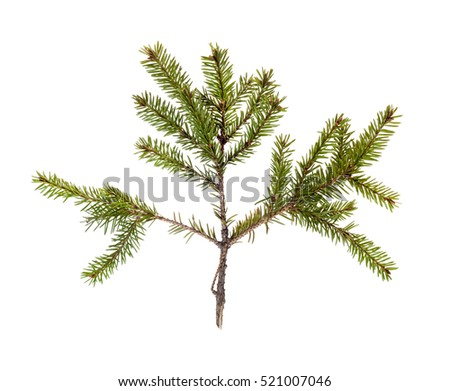 the branch of the plant on white background isolated #521007046
