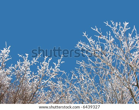 The branches covered with snow