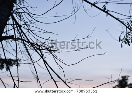 The branches of tree