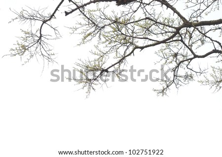 The branches on a white background