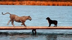 The brave dog is not afraid of anyone, especially wild animals