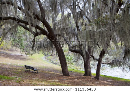The breeze blows through the spanish moss of a Winter Park, FL neighborhood. Whispers are created as the moss sways back and forth.