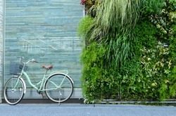 the brick/stone wall with the bicycle  with  wall decorated by small tree. the nature interior design concept