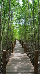 The bridge stretches deep among the bright green trees, Wood bridge on the forest vanishing point perspective
