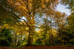 The bright autumn colors in full display in the Bolam Lake Woodland