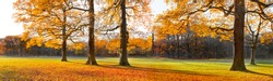 The bright colors of autumn trees. Dry leaves in the foreground. Autumn landscape. Panorama.