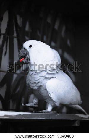 The bright colourful beautiful parrot sits on a branch eat red pill