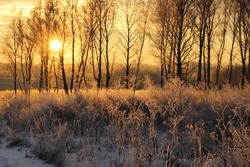 The bright morning sun shines a Sunny yellow light on trees and dry grass covered with frost. Winter frosty morning. Russia. Siberia.