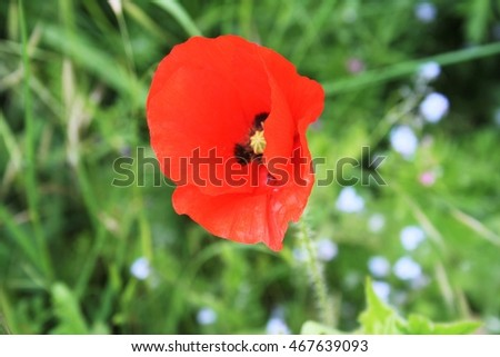 The bright red poppy symbol of the french countryside serves as the the bright red poppy symbol of the french countryside serves as the border fields mightylinksfo