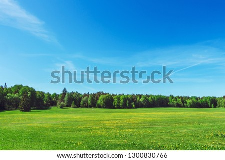 The bright sun over the green meadow covered by yellow dandelions. Blue sky and forest on background. Rural landscape in countryside. Sunny summer day. Beautiful summer postcard. Space for your text. #1300830766