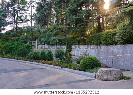 the bright sunlight of the western sunlight shines through the trunks of coniferous trees in the park #1135292312