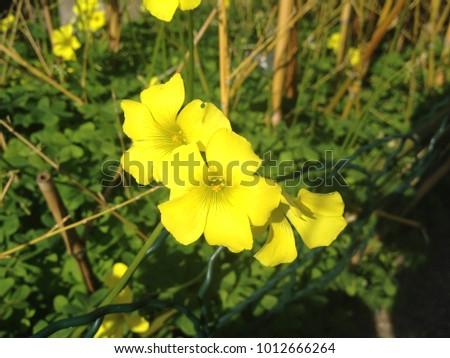 The bright yellow flowers for happy mondays ez canvas the bright yellow flowers for happy mondays mightylinksfo