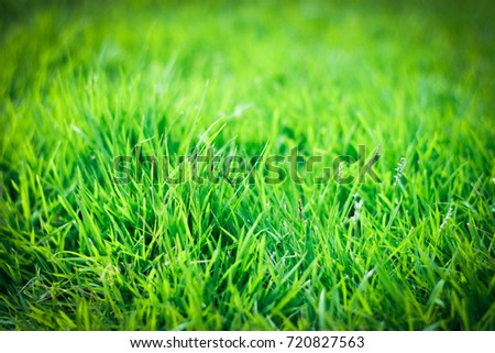 The brightest green grass background is the most beautiful. #720827563