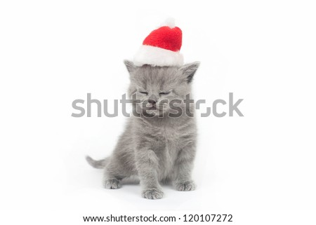 the British kitten in a cap on a white background