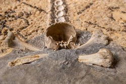 The broken skull and bones of a human on the wall in the Church.