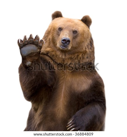 The brown bear welcomes, waves a paw. It is isolated on a white background. #36884809