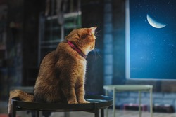 The brown cat sat alone and watched the half of the moon.