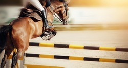 The brown horse overcomes an obstacle. Equestrian sport, jumping.