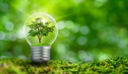 The bulb is located on the inside with leaves forest and the trees are in the light. Concepts of environmental conservation and global warming plant growing inside lamp bulb over dry