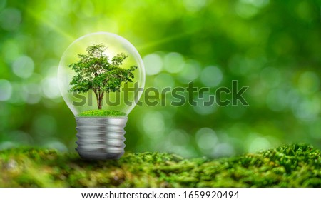 The bulb is located on the inside with leaves forest and the trees are in the light. Concepts of environmental conservation and global warming plant growing inside lamp bulb over dry ストックフォト ©