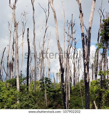 The burned forest on Carrao river near lagoon of Canaima national park - Venezuela