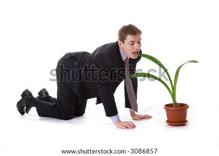 The businessman stands on his knees and going to eat office plants. - Feel hungry at work?