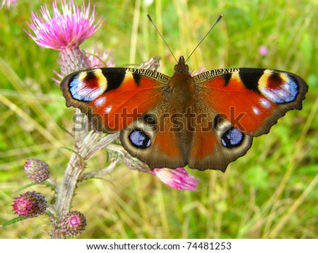 The butterfly on a flower in all beauty close up
