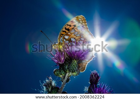 The butterfly on the thistle flower, shot in the contra light. Silver-washed fritillary (Argynnis paphia, typical form of color), selective focus, blurred blue sky background Foto stock ©