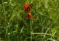 The butterfly orange in the flower