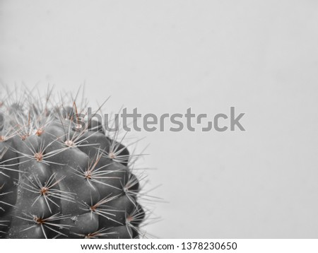 The cactus's sharp thorn is the sharp edge of thought.