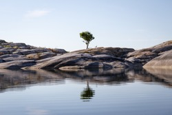 The calm sea reflects a lonely tree growing on an islet under a clear blue summer sky in Stockholm archipelago