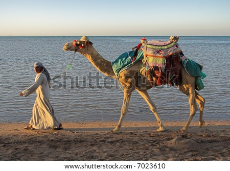 The camel and the drover go along the sea