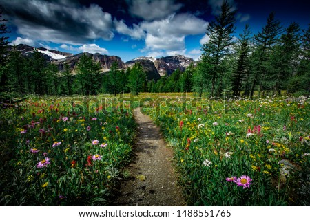 The Canadian Rockies are dotted with beautiful meadows filled with alpine flowers, alpine lakes with turquoise waters and huge giant cedar trees. The summer season in the Canadian Rockies is the best! #1488551765