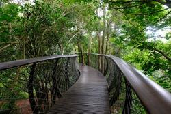 The canopy walk skybridge in the Kirstenbosch National Botanical Garden