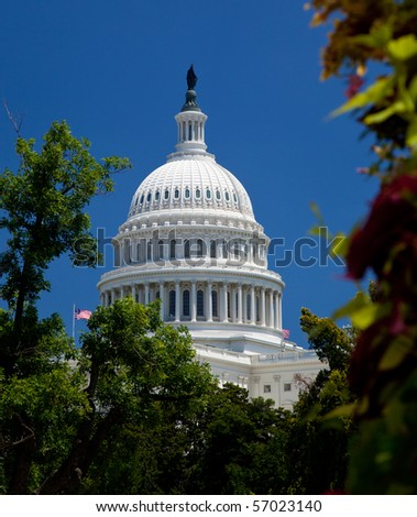 The Capitol building in Washington DC framed by tree with flowers in the foreground