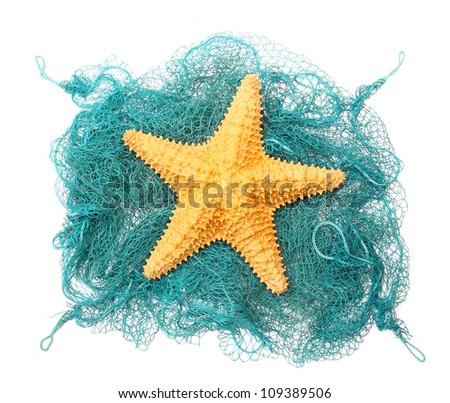 The caribbean starfish on a fishing net.