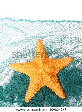 The caribbean starfish on a fishing net.