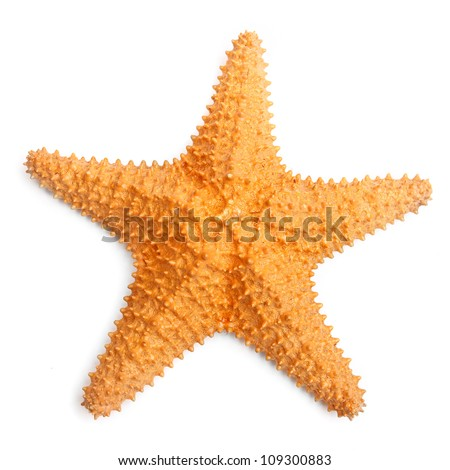 The caribbean starfish on a white background. #109300883